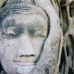 Ayuthaya buddhas head banyan tree — Stock Photo
