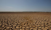 Dried up Land — Stock Photo