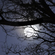 Stock Photo: Full Moon