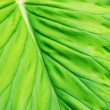 Leaf Macro — Stock Photo
