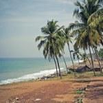 Small path on the beach under palms. — Stock Photo #2872580