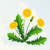 Dandelion — Stock Vector