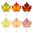 Set of leaves - Stock Vector