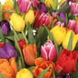 BUNCH OF COLORFUL TULIPS — Stock Photo