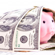 Royalty-Free Stock Photo: Dollars and pig