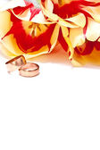 Tulips and rings — Stock Photo