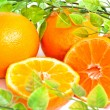 Orange — Stock Photo #2960425