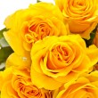 Yellow roses — Stock Photo #3024815