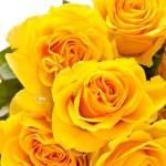 rosas amarelas — Foto Stock