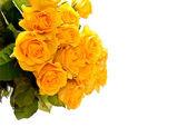Roses — Foto de Stock
