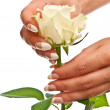 Beautiful hands and rose - Stock Photo