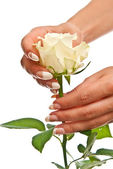 Beautiful hands and rose — Stock Photo