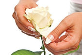 Rose in hands — Stock Photo