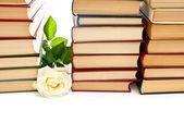 Rose y libros — Foto de Stock