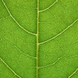 Stock Photo: Leaf detail
