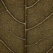 Grunge Leaf detail - Foto Stock