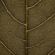 Grunge Leaf detail - Stock Photo