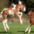 Flying foal — Stock Photo #2918590