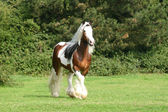 Stallion in the woods — Stock Photo