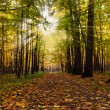 Path in autumn park — Stock Photo #3873214