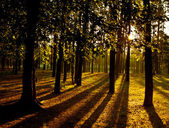 Awakening of day in the forest. — Stock Photo