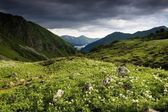 Mountain landscape with flowers. — Stock Photo