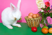 Easter Bunny - Playing Hide And Seek — Stock Photo