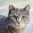 Cute Striped Tabby Watching Me — Stock Photo