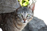 Tabby Staring At The Camera — Stock Photo