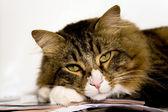 Portrait Of Cat — Stockfoto