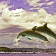 Couple Of Dolphins Jumping — Stock Photo #3264999