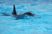 Delfino nell'acqua blu — Foto Stock