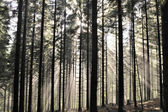 Misty landscapes in forest. — Stock Photo