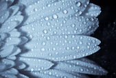 Waterderdrops on petals — Stock Photo
