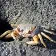 Beach crab — Foto de stock #2850739