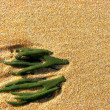 Green alga under the sand — Stock Photo