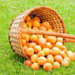 Stock Photo: Apricots in a basket