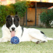 Ball for dog — Stock Photo #3572032