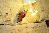 Butterfly and light — Stock Photo