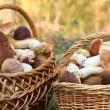 Stock Photo: Basket with porcini mushrooms