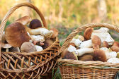 Basket with porcini mushrooms — Stock Photo