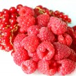 Stock Photo: Raspberries and red currants