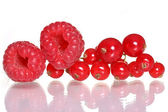 Raspberries and red currants — Stock Photo