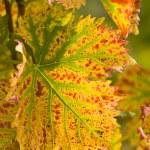 Sun in autumn — Stock Photo