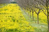 Wiosna w Prowansji — Zdjęcie stockowe