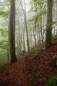 Floresta negra andando — Fotografia Stock
