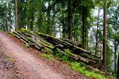 Lumberyard — Stock fotografie