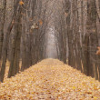 Yellow road through the forest — Stock Photo