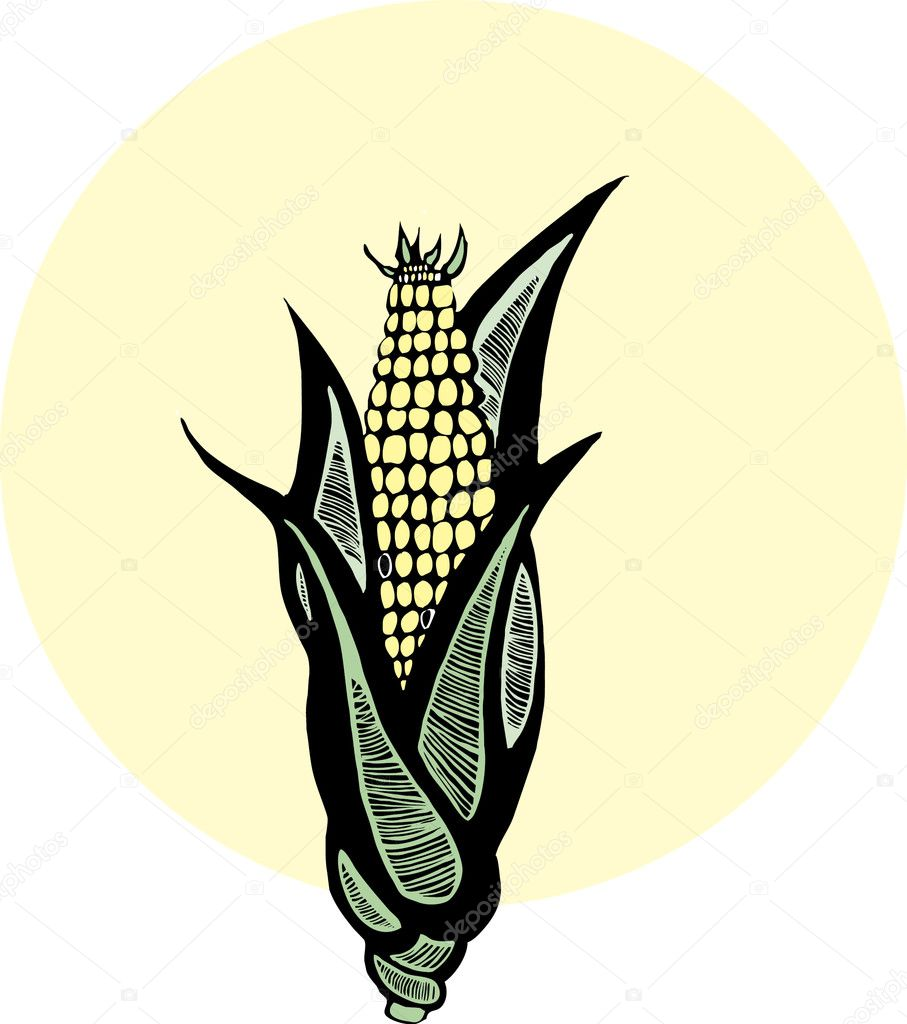 Woodcut image of yellow corn in husk — Stock Vector #2852783
