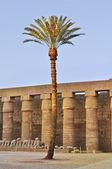 Palm tree in desert — Stock fotografie
